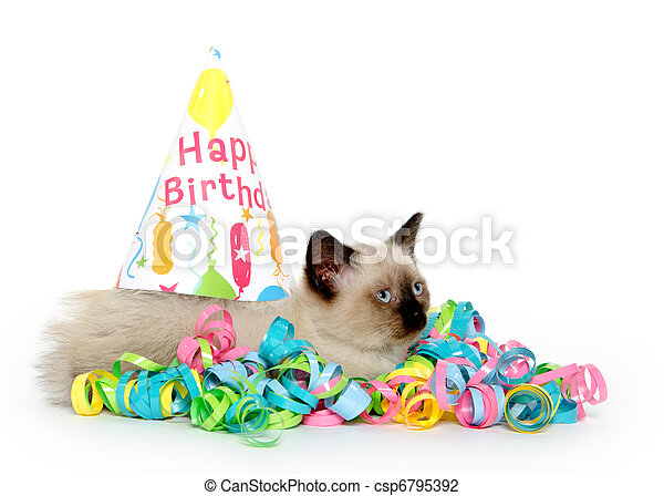 Cute Kitten And Birthday Party Decorations