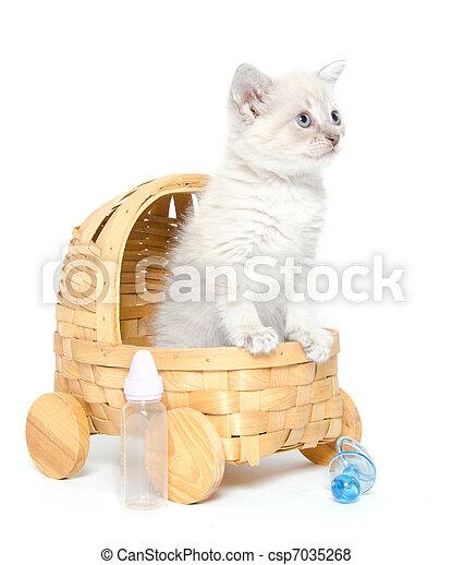 Cute kitten in a stroller - csp7035268