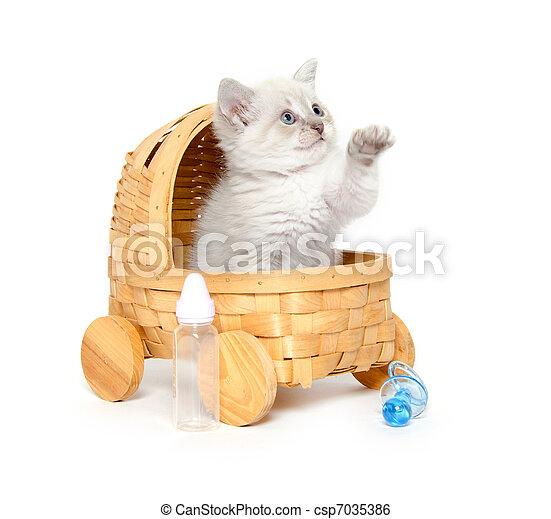 Cute kitten in a stroller - csp7035386