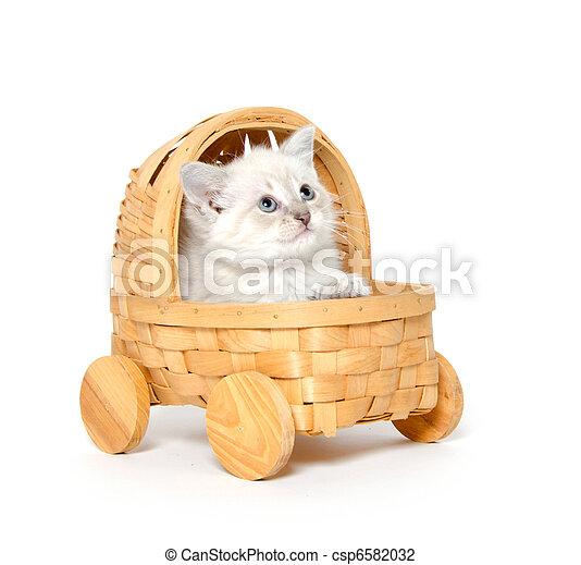 Cute kitten in a stroller - csp6582032