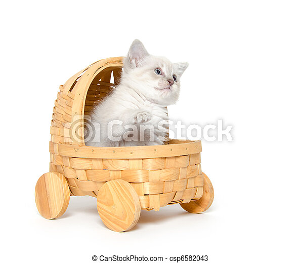 Cute kitten in a stroller - csp6582043