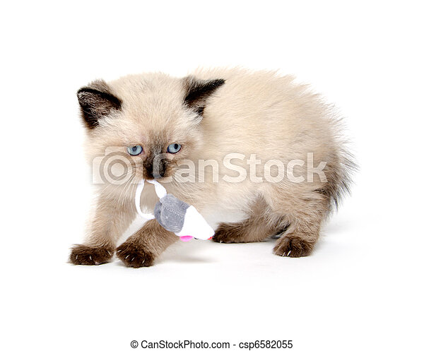 Cute kitten playing with toy mouse - csp6582055