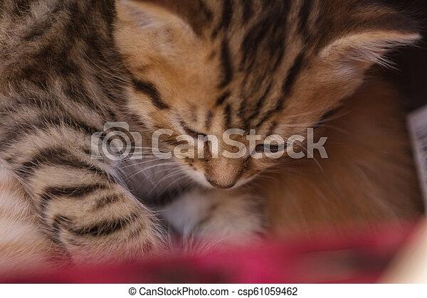 Cute kitten sleeping in a basket - csp61059462