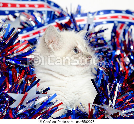 Cute kitten with Fourth of July decorations - csp6582076