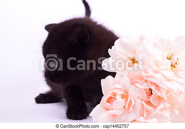 Cute kitten with rose - csp14452757