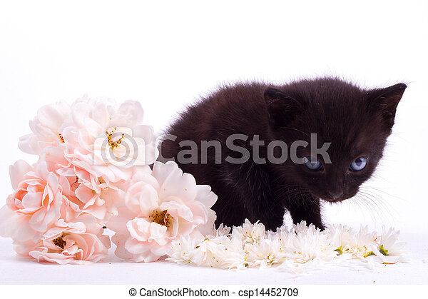 Cute kitten with rose - csp14452709