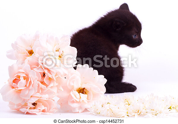Cute kitten with rose - csp14452731