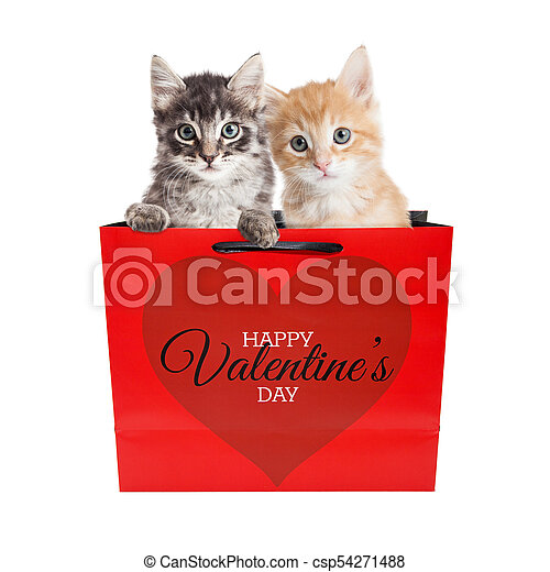 Cute Kittens In Valentines Day Bag Two Cute Kittens In A