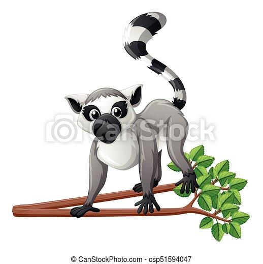 Cute lemur on the branch - csp51594047