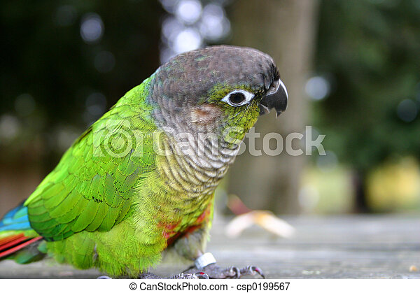 Cute Little Parrot - csp0199567