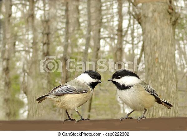 cute, pássaro - csp0222302