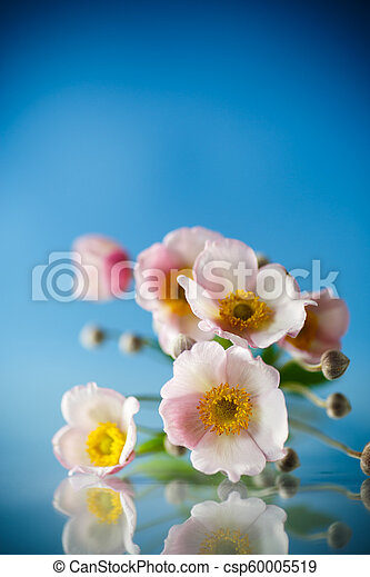 Cute pink flowers on a blue background - csp60005519