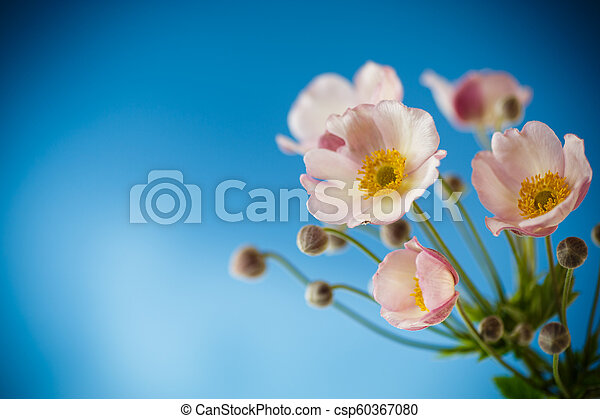 Cute pink flowers on a blue background - csp60367080
