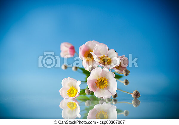 Cute pink flowers on a blue background - csp60367067