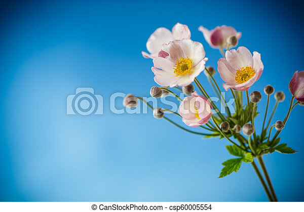 Cute pink flowers on a blue background - csp60005554