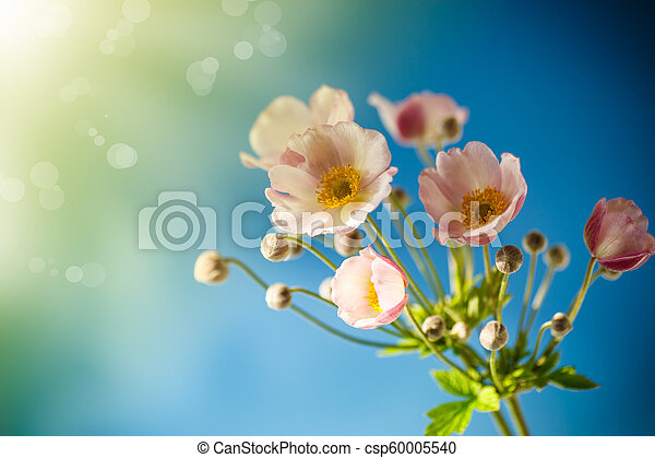 Cute pink flowers on a blue background - csp60005540