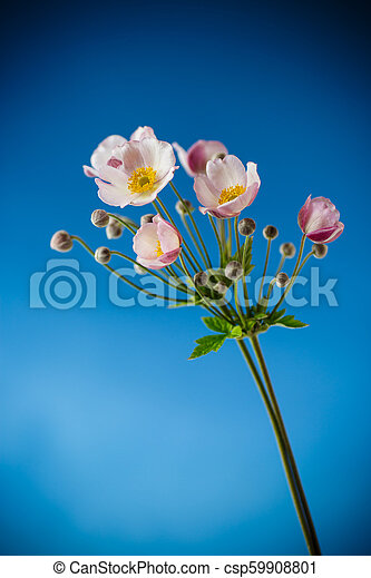 Cute pink flowers on a blue background - csp59908801