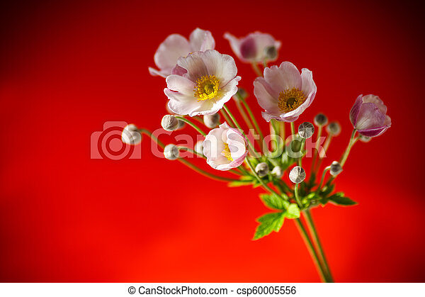 Cute pink flowers on a red background - csp60005556