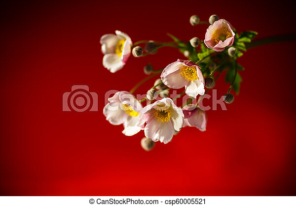 Cute pink flowers on a red background - csp60005521