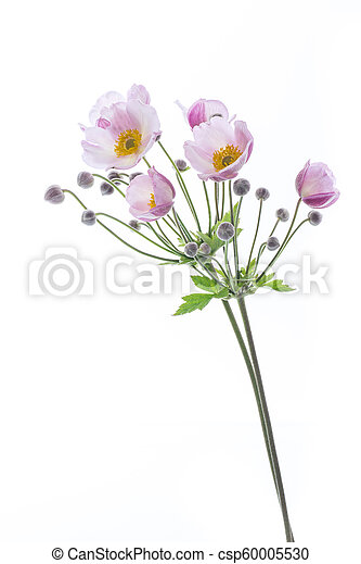 Cute pink flowers on a white background - csp60005530
