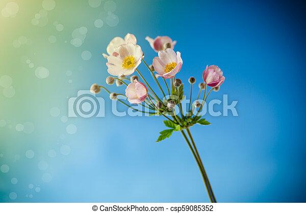 Cute pink flowers - csp59085352