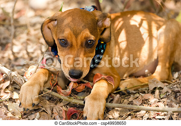 Cute Puppy Dog Eyes A Cute Brown Puppy Is Looking Up With Beautiful