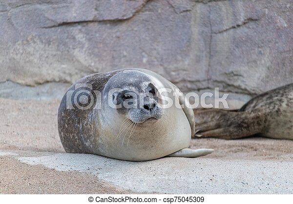 Cute Seal Pup Relaxing In The Sand