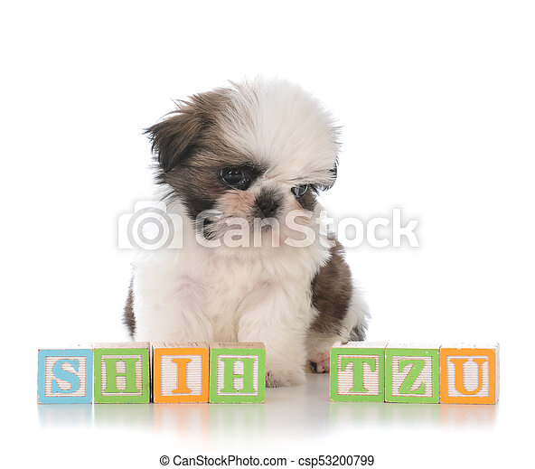 Cute Shih Tzu Puppy With Block Letters Cute Puppy Behind Block