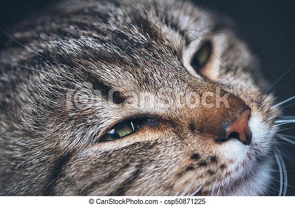 cute sleeping cat portrait - csp50871225