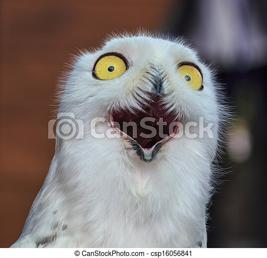 Image of: Wallpapers Hd Cute Snowy Owl Can Stock Photo Cute Snowy Owl