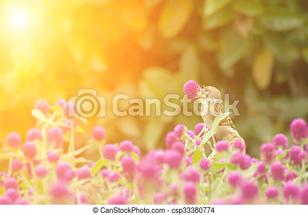cute sparrow stand on the beautiful purple flowers - csp33380774