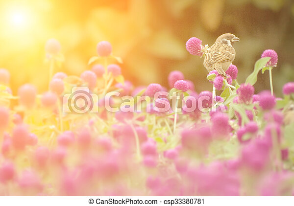 cute sparrow stand on the beautiful purple flowers - csp33380781