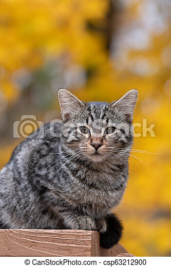Cute tabby cat with yellow background - csp63212900