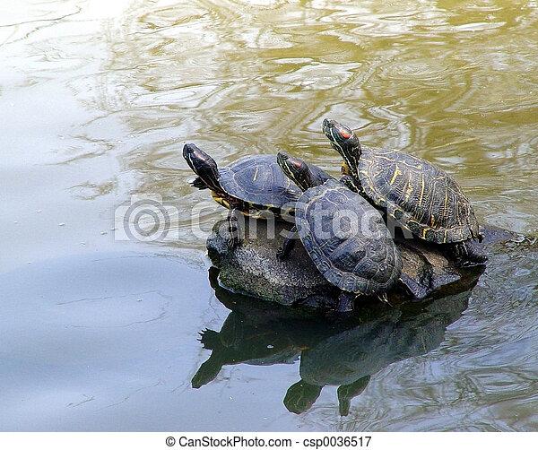 Cute turtles - csp0036517