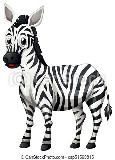 Cute Zebra On White Background Illustration