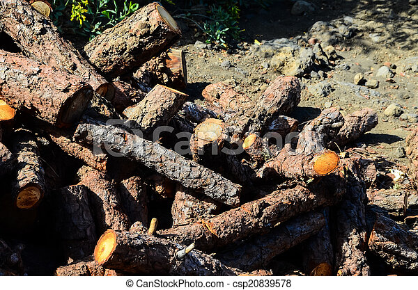 Cutted Wood Trunk Texture - csp20839578