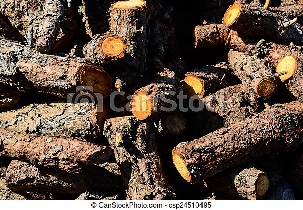 Cutted Wood Trunk Texture - csp24510495