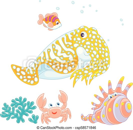 Cuttlefish, crab, shell and fish - csp58571846