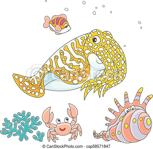 Cuttlefish, crab, shell and fish - csp58571847
