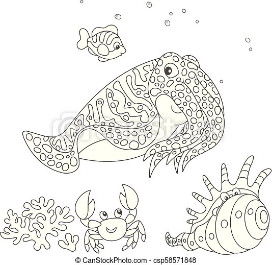 Cuttlefish, crab, shell and fish - csp58571848