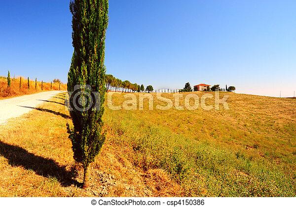 Cypress - csp4150386