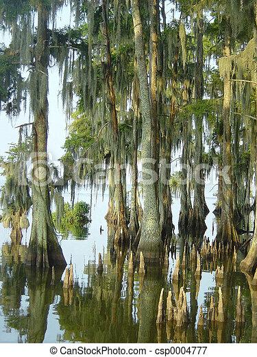 Cypress Swamp - csp0004777