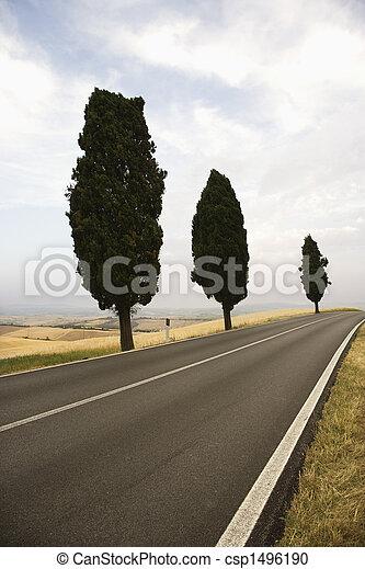 Cypress trees along road. - csp1496190