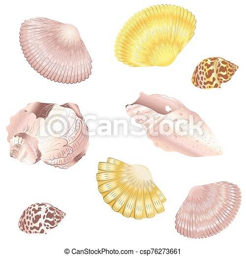 décoratif, ensemble, seashell - csp76273661