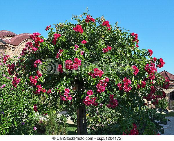 D coratif grand arbre fleurir fleurs rouges image recherchez photos clipart csp51284172 - Arbres a fleurs rouges ...