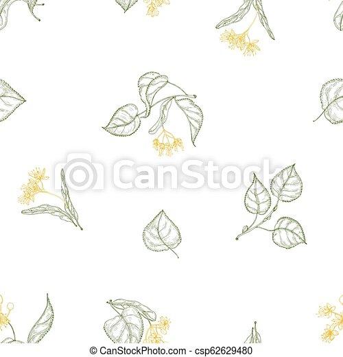 décoratif, tilleul, wallpaper., naturel, papier, modèle, feuilles, arbre, seamless, illustration, lignes, arrière-plan., vecteur, emballage, foliage., fleurir, dessiné, fleurs blanches, contour, toile de fond - csp62629480