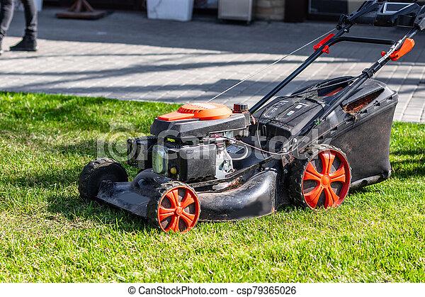 découpage, day., pelouse, vert, faucheur, herbe, ensoleillé, arrière-cour - csp79365026