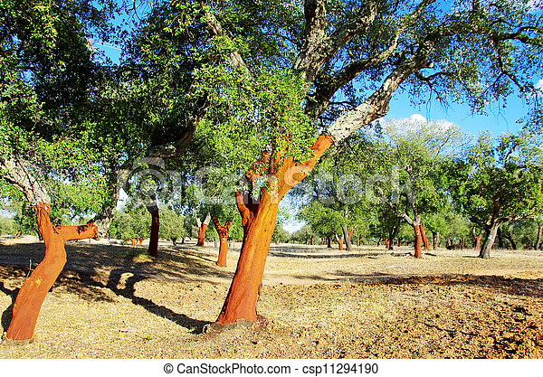 dépouillé, arbres, portugal, bouchon - csp11294190