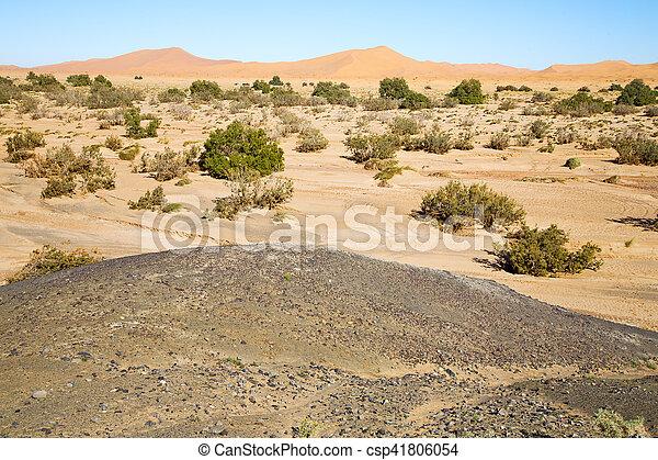 désert, arbre, fossile, vieux - csp41806054