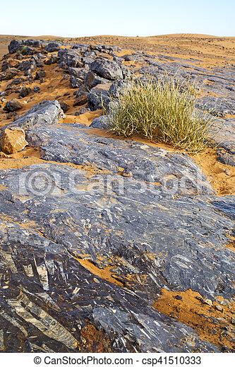 désert, buisson, fossile, vieux - csp41510333